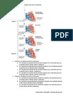 taller de graficas de ciclo ciclo cardiaco sistole y diastole - CORREGIDO (1)