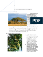 Timber assignment.docx