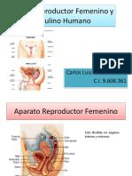 aparato reproductor femenino y masculinohumano.pdf