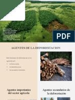AGENTES Y CAUSAS DE LA DEFORESTACION (9).pptx