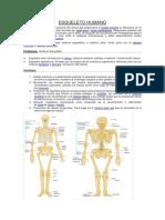 ESQUELETO HUMANO (1).pdf