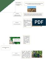 ciclo vegetativo de la vid
