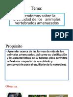 Aprendemos obre la diversidad de los animales amenzados del Perú 08-06-2020 (8)