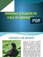 ANIMALE SI PLANTE PE CALE DE DISPARITIE