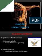 clase3-Osteomioart