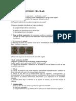 pau_repaso__division_celular