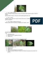 Vertues_des_plantes_du_Gabon-2_(1)[1]