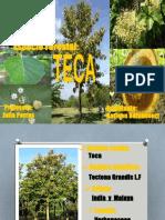 Especie Forestal TECA.pptx