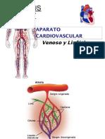 Cardiovascular Venoso y Linfatico