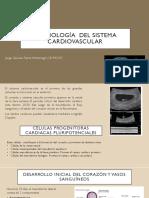 Embriología Del Sistema Cardiovascular