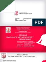 8° PRACTICA SISTEMA NERVIOSO Y TEGUMENTARIO PDF