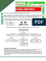 Sistema-Nervioso-para-niños-de-Cuarto-de-Primaria