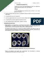 Euglenophyta-Pyrrophyta.pdf