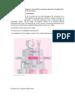 Los principales cambios fisiológicos y características sexuales que aparecen en la adolescencia para niños en contraste con los de las niñas.docx