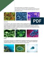 Arqueobacterias