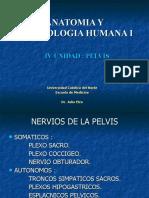 Vasos y Nervios de La Pelvis