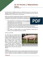 35. Mejoramiento genetico Porcinos