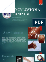 285075635-Ancylostoma-caninum.pptx