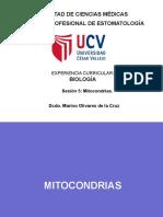 Sesión 5 - Mitocondrias.pptx
