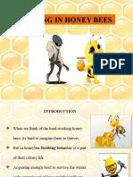 Robbing in honey bees