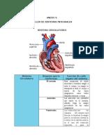 morfofisiologia anexo 3.docx