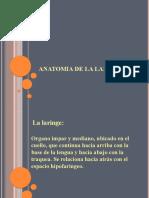 Anatomia de la laringe (1)