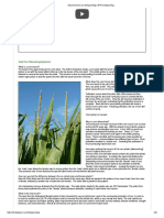 About Seed Corn Detasseling _ NTR Detasseling.pdf