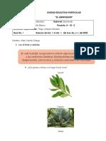 Guía 4 Ciencias Naturales 4°to Básico Allan Carrillo.docx