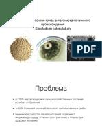 Презентация .pdf