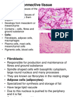 6. Connective tissue