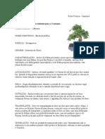 Ficha Técnica bonsai carmona
