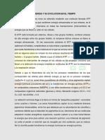 LA ENERGIA Y SU EVOLUCION EN EL TIEMPO ensayo.pdf