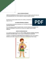 sistema digestivo 4