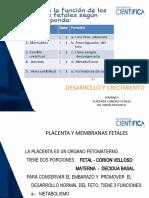SEMANA 5  Placenta   GHB 2020