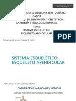 Cap. 8_Esqueleto Apendicular..pdf