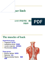 The Upper Limb