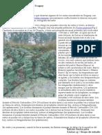 Una introducción a los cactus de Uruguay (1) con marca de agua.pdf