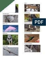 imagenes animales del ecuador