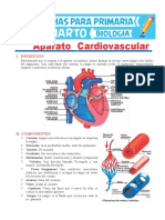 Aparato-Cardiovascular-para-Cuarto-de-Primaria