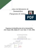 Flujograma diagnostisco dermatofitos PP