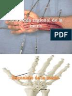 anatomaregionaldelamanoanaexpo-150902143746-lva1-app6891