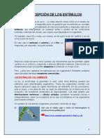 Facundo Juarez - LA PERCEPCIÓN DE LOS ESTÍMULOS.docx