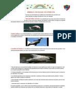 ¡AL RESCATE DE LOS ANIMALES AMENAZADOS DEL PERÚ!.pdf