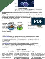 infografia de la celula y tipos de celulas.pptx
