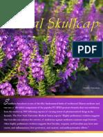 Baikal Skullcap