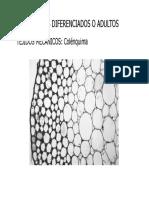 Cap. II - 4. Histologia II.pdf