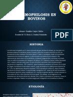 histophilus-somni-en-bovinos