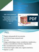 1. Histología de la piel. 2020.pptx