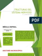 Médula Espinal.pptx