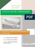 CICLO-BIOLOGICO-DE-DIATRAEA-SACCHARALIS-RTD.docx